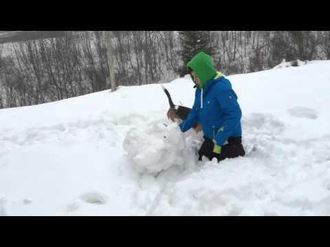Meet a Beagle Lennox Luis Snow Day