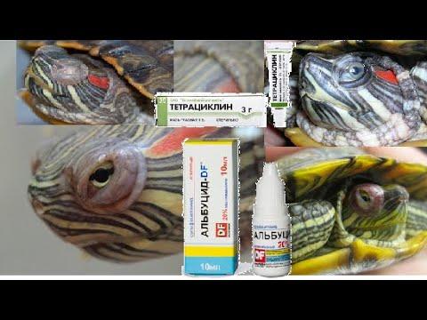 Как лечить опухшие глаза у красноухих черепах. Красные глаза. Помутнение глаз. Болезни глаз.