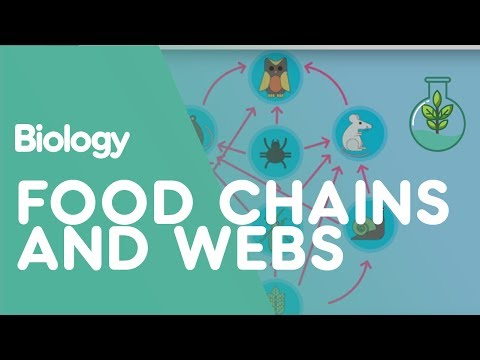 Food Chains & Food Webs | Ecology & Environment | Biology | FuseSchool