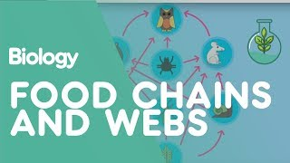 Food Chains and Food Webs | Biology for All | FuseSchool