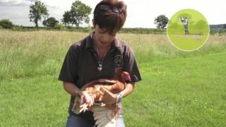Nettex poultry Scaly Leg Spray