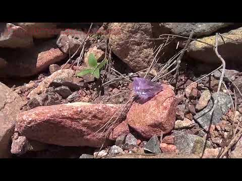 Среди гор речных камней есть и драгоценные камни