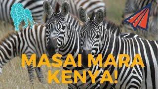 MASAI MARA Safari - KENYA