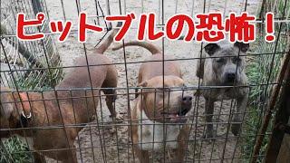 チャンネル登録お願いします 【Dog Rescue A&Rの素顔】 https://www.you...