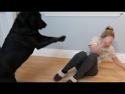 i tried to teach my dog tricks...