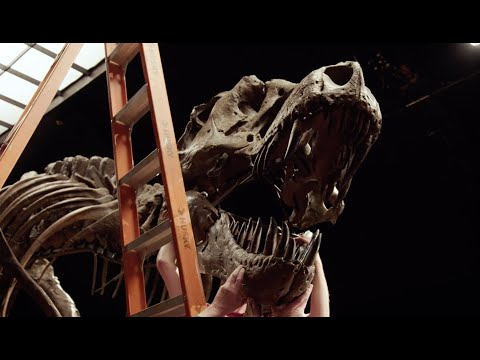 T. rex STAN — One of the Biggest and Most Complete Skeletons Ever Found   Christie's