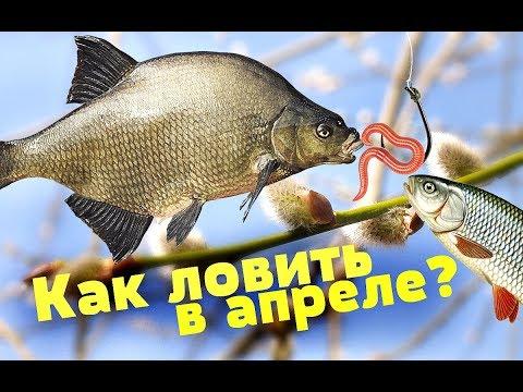 Какая рыба ловится в апреле? На что ловится рыба в апреле? Поведение рыбы в апреле!
