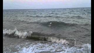 from Banggood.com : FT009 IN SEA JUMPING BEACH WAVES RC BOAT VIDEO