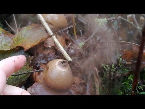Mushroom Captured Puffing Smoke Cloud