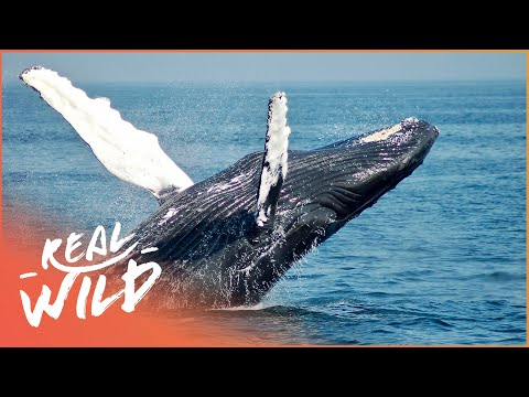 Footprints On The Water: The Nan Hauser Story [Whale Documentary] | Wild Things