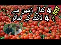 watch he video of This person earned 400,000 from 4 kinal tomato in 2017