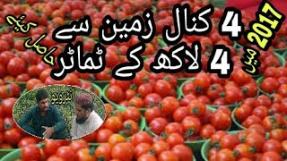 This person earned 400,000 from 4 kinal tomato in 2017