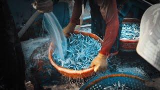 Giữa khuya đi theo tàu cá, bữa ăn lênh đênh giữa biển  Du lịch Việt Nam