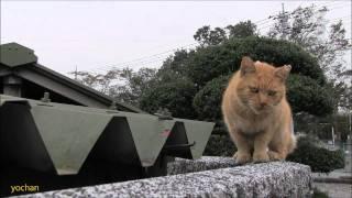 пацанский кот без хвоста на районе