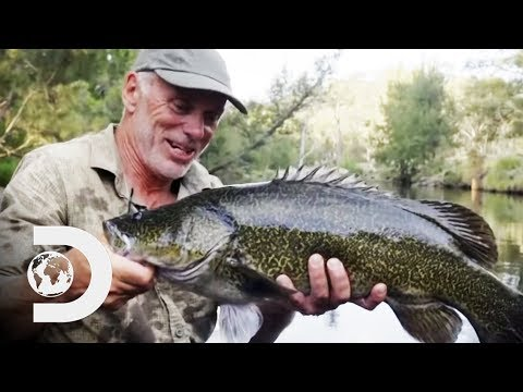 Searching For The Legendary Murray Cod In The Australian Outback   Jeremy Wade's Dark Waters