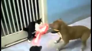 قط يضرب كلب باليزر