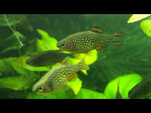 My Favorite Nano Fish