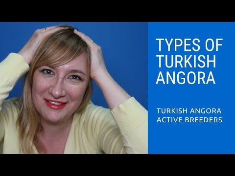 Types of Turkish Angora Cats