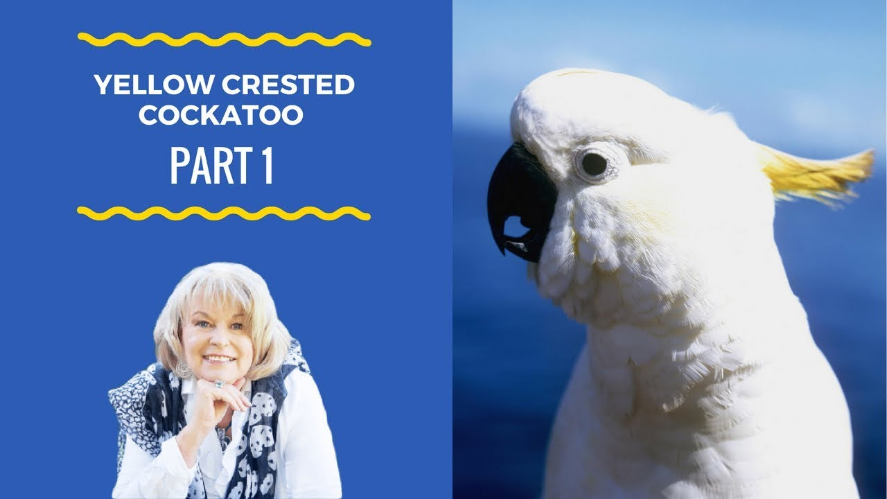 The true spiritual meaning of the Yellow Crested Cockatoo - Part 1