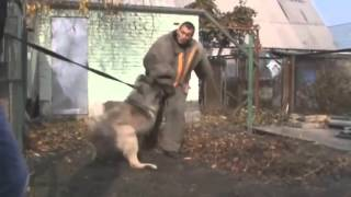 Best Guard!!! Fivehills Bandit with dog trainer George Mantzouranis...