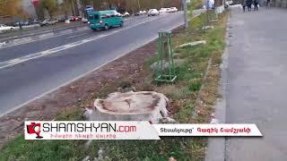 Երևանում բնակիչները ահազանգում են գիշերային ծառերի սպանդի մասին