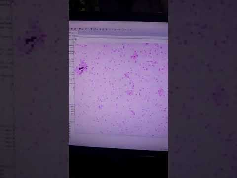 Totalistic Neural Network Controlled Cellular Automata Resembles Mitosis (Unicellular Reproduction)