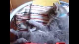 Смешные Позитивное Видео про Кошек
