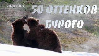 50 ОТТЕНКОВ БУРОГО#1//Любовь у медведей. Животный мир.// PRIRODA SHOW.