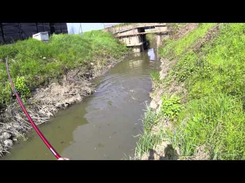 36lb and 28lb Flathead Catfish Caught on Light Tackle! from YouTube · High Definition · Duration:  9 minutes 36 seconds  · 492 views · uploaded on 5/28/2017 · uploaded by S City Outdoors