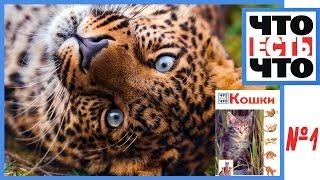 Кто были предки домашней кошки? История кошек и Саблезубый тигр.