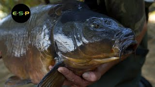 Terry Hearn - Tunnel Vision - Iconic Carp Fishing
