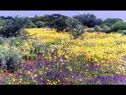 Wild Flower Season In Western Australia