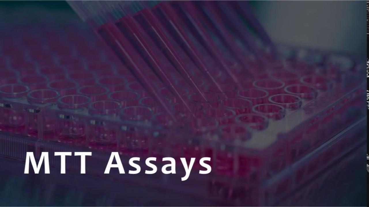 Download MTT Assay for Cell Viability