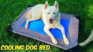 Cooling Dog Water Bed