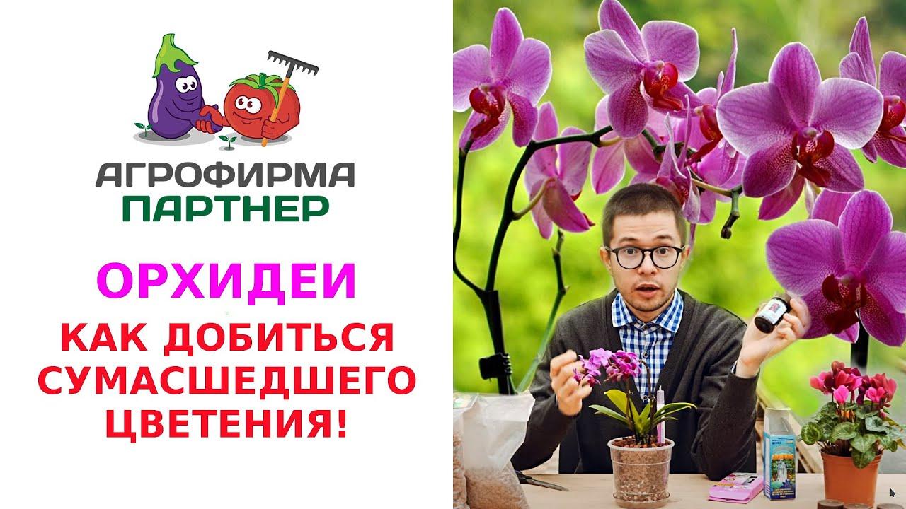 ОРХИДЕИ - КАК ДОБИТЬСЯ СУМАСШЕДШЕГО ЦВЕТЕНИЯ!