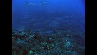 Diving Service - Torre Vado (LE) - Subacqueando nel Salento