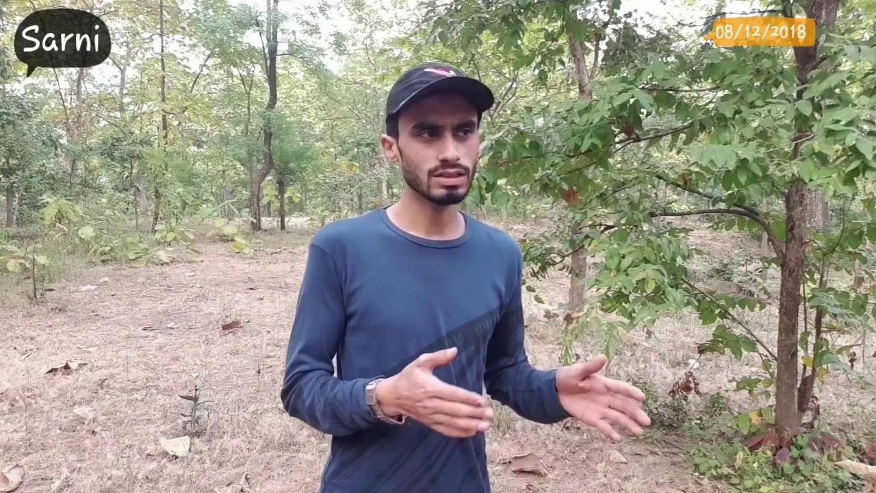 Tiger In Sarni (Full Story) Part-01