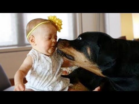 Rottweiler Protects Baby Compilation