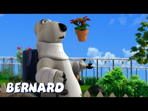Bernard Bear | Bandages And A Wheelchair AND MORE | Cartoons for Children