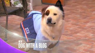 "Dog With a Blog - ""Avery Makes Over Max"" Promo"