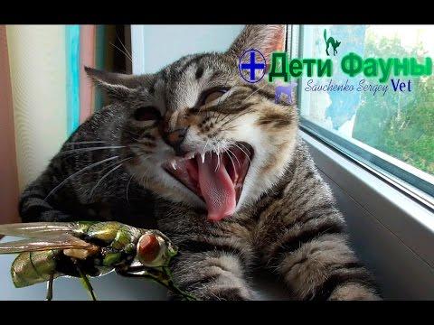 Если кошка ест мух, что будет? Советы ветеринара