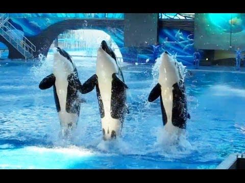 One Ocean (Full Show) SeaWorld Orlando 9/9/13