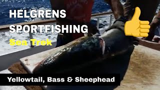 Yellowtail, Calico Bass and Sheephead - Helgrens Sportfishing - Oceanside, CA