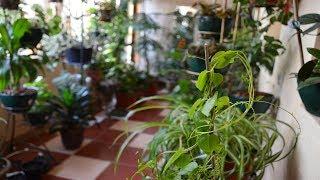 Комнатные растения. А много ли их у нас!?