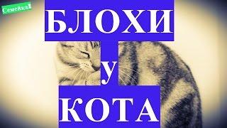Как избавиться от БЛОХ у КОТА. Котенка. У кошки. Шампунь. В домашних условиях. Блохи у кошки. Кота