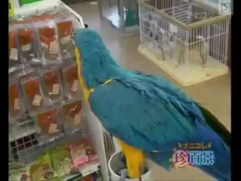 The Funniest Parrots ever