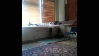Кот смешно залезает в гамак!