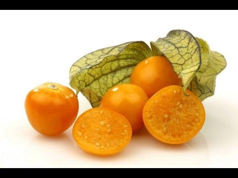 Физалис. Чем полезен и свойства овощного физалиса. Овощной