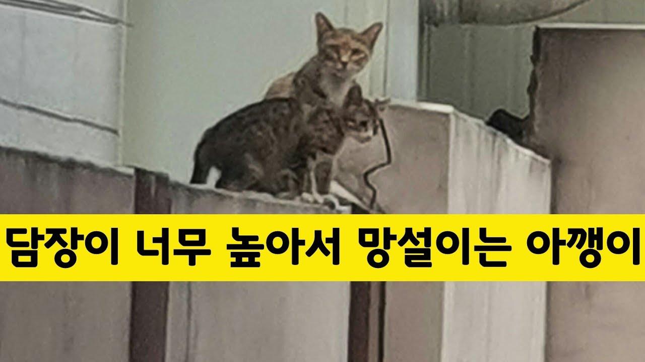 [stray cat, kitten] 담장이 너무 높아서 망설이는 아깽이, Cat Purring, food, 새끼 고양이, 냥이, 길고양이, 새끼 냥이, 길냥이,cat, kitten