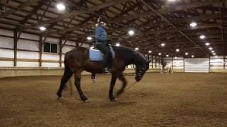 Lunge Line Lesson: Linda and Valor thumbnail